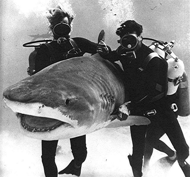 Big John McLaughlin in action during the filming of Thunderball in the Bahamas 1965
